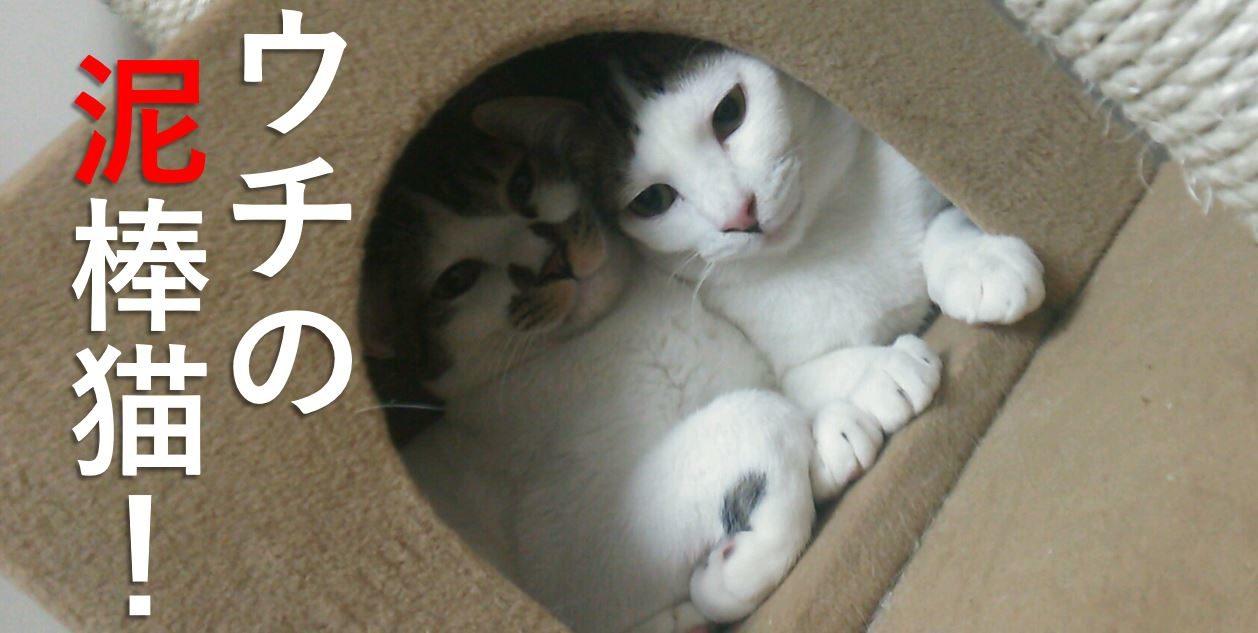 ウチの泥棒猫!里親ご主人と猫達の癒しのカフェ空間