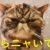 撫でた後に猫がすぐ毛づくろいするのはなぜ?もしかして嫌われてる?