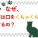猫が口をクチャクチャするのはなぜ?どういう気持ちなの?