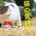 ネコの気持ちが分かるアプリ?人の言葉を猫語に翻訳できる?
