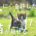 猫が癒しを感じて心を許す仕草とは?信頼し見せる姿BEST7!