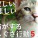 猫が寂しい悲しいとするしぐさ5選!効果的な接し方や方法は?